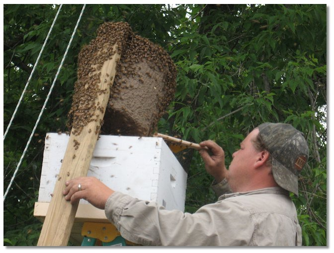 , Beekeeping Consulting