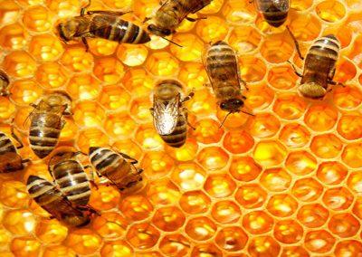 honey consult
