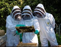 Introduction into Beekeeping