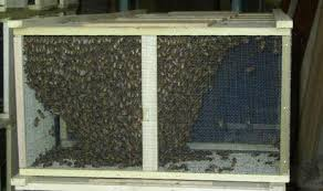 Package Bees (Pick Up Only)